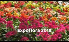 EXPOFLORA 2018 | Tendência e novidades em flores
